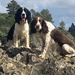 Mintee b&w Flynn these two cover a lot of ground fast loving the beach Te Ngaere Bay Northland
