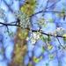 Spring Blooms by lynnz