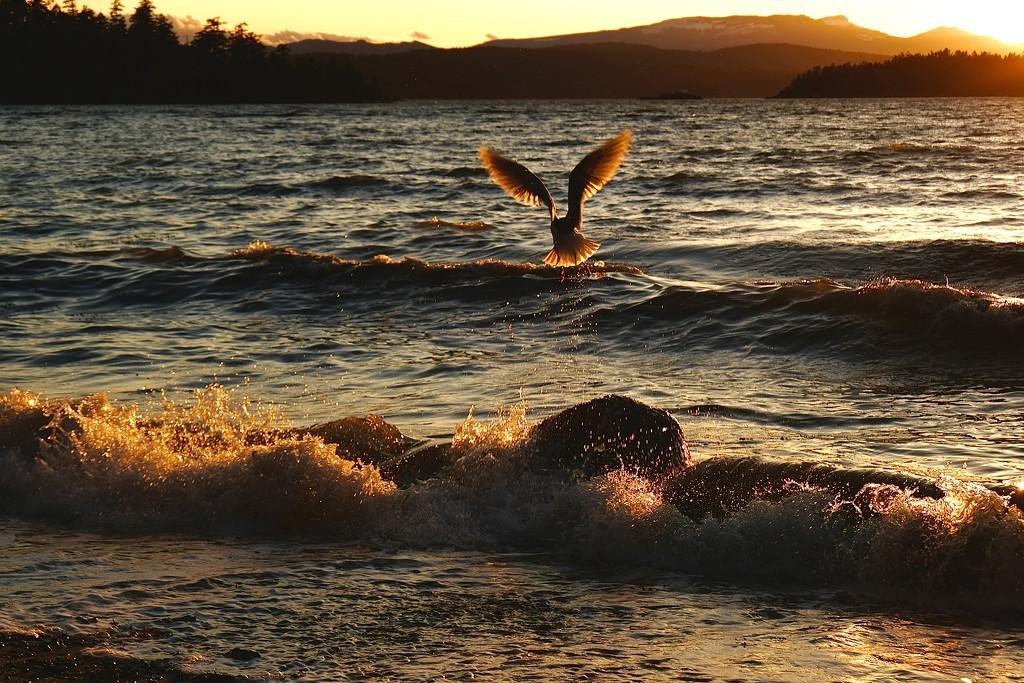 Bird Bath by yoland