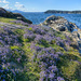 Flowery Point by kwind