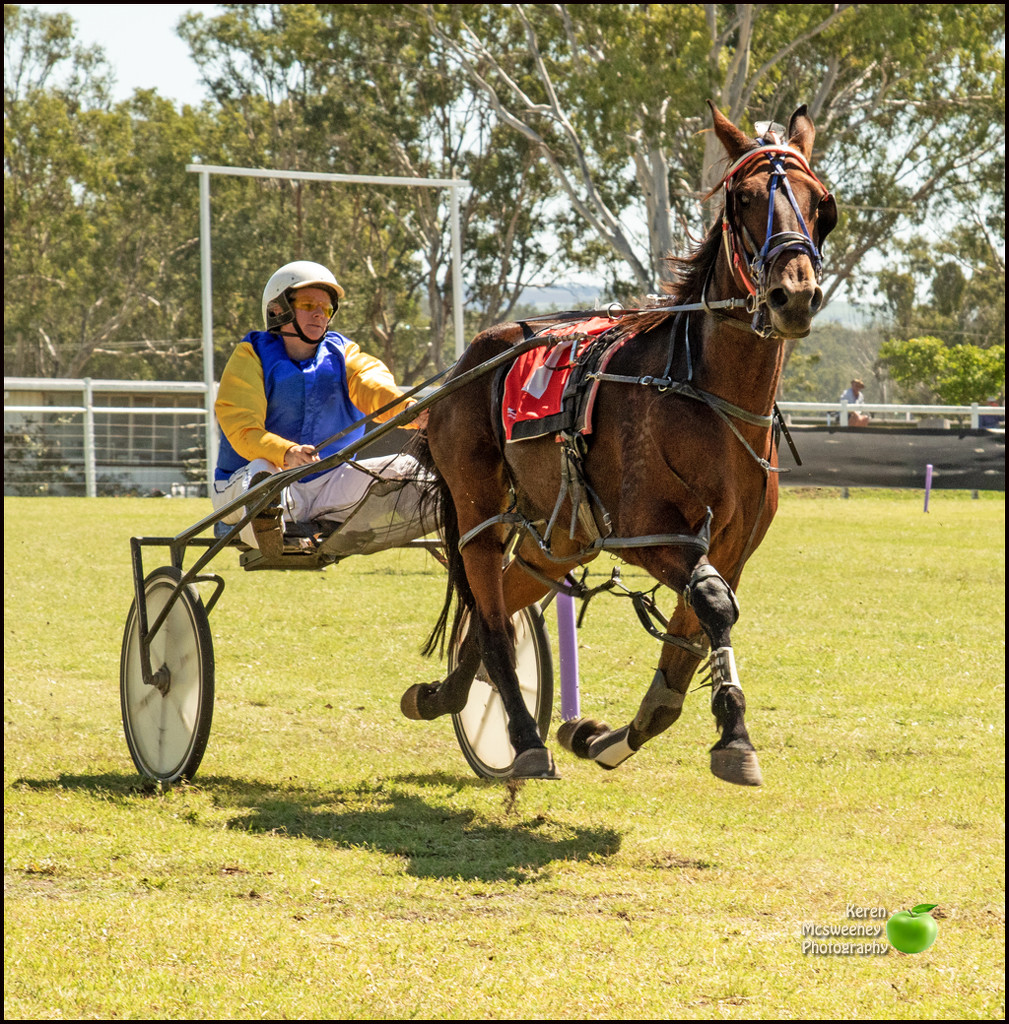 Trots at the Nanango show Queensland, Australia by kerenmcsweeney