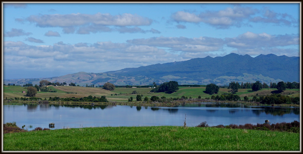 Waikato countryside by dide