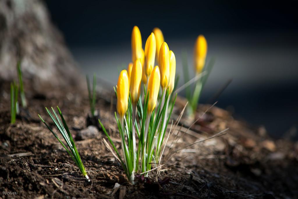 Garden flowers by novab