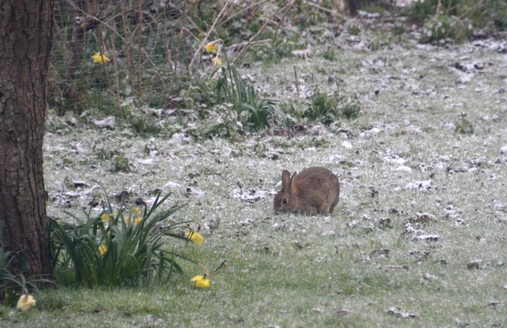 Rabbit in the Snow by arkensiel