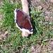 Butterfly,,,,
