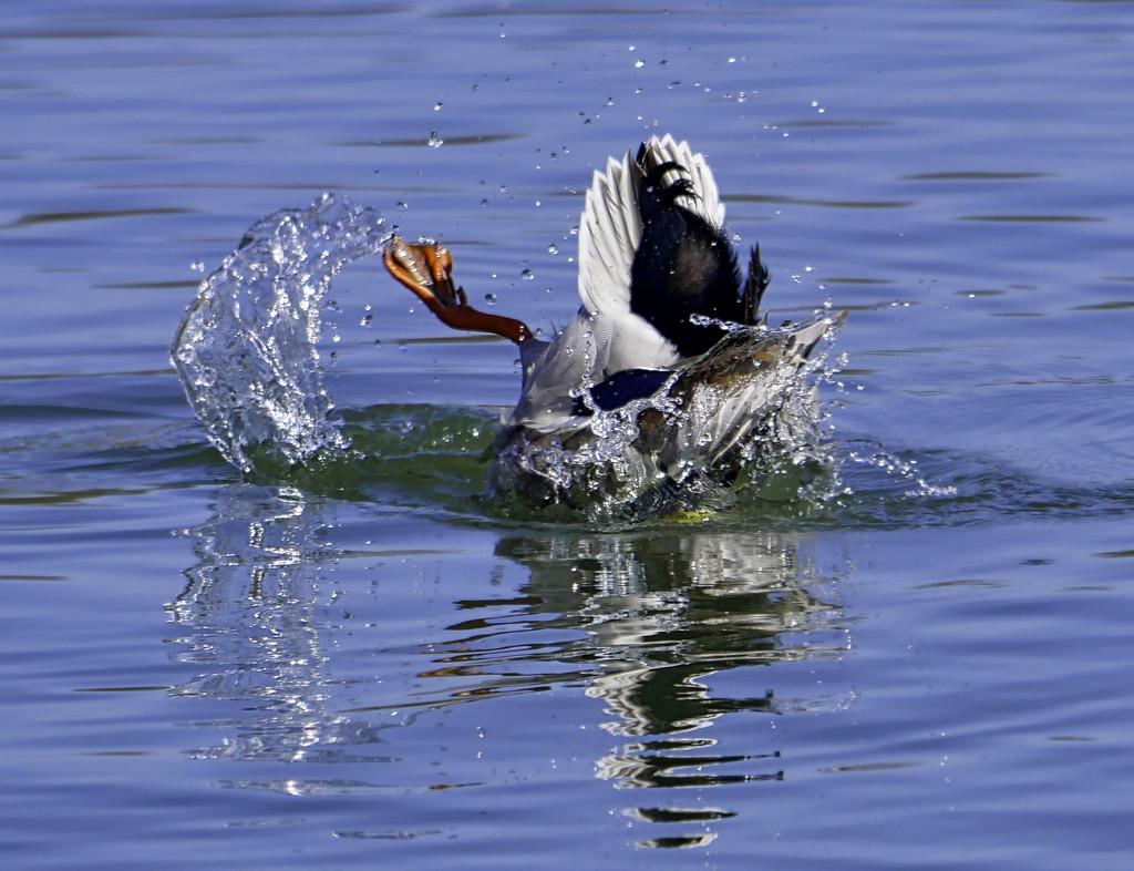Splash by tonygig