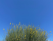 12th Apr 2021 - Little yellow flowers