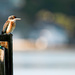 Kingfisher by helenw2