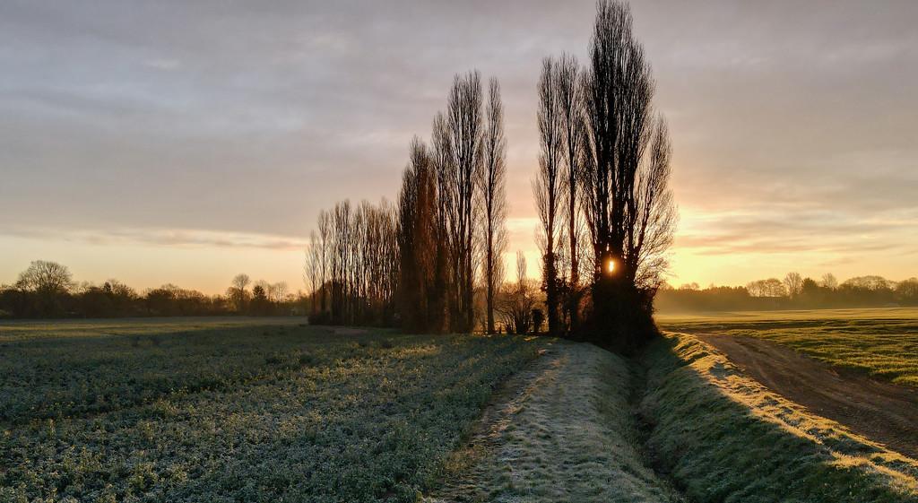 Sunrise Trees by backspin71