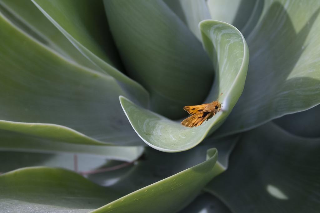 Mystery Type of Skipper Butterfly by mrslaloggie