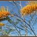 Australian wild flowers at their best by 777margo
