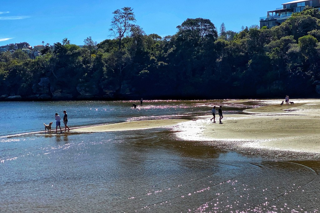 Sandy Bay, Sydney Harbour at very low tide by johnfalconer