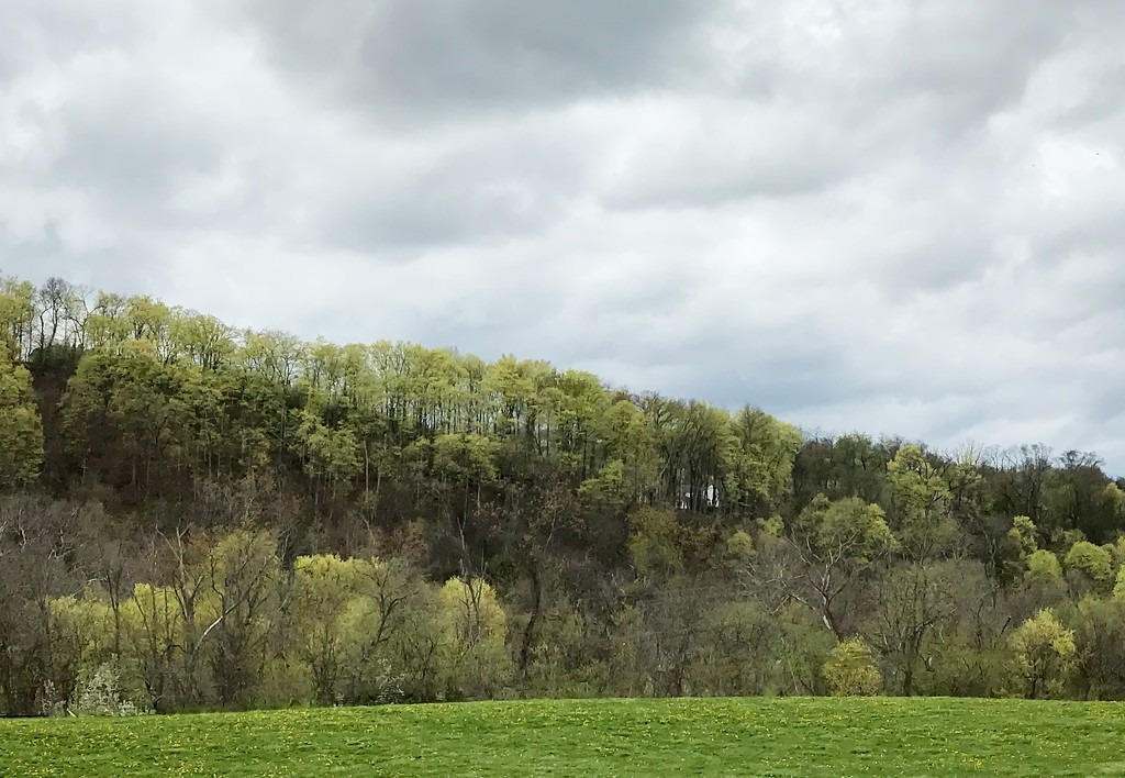 Green trees by mittens