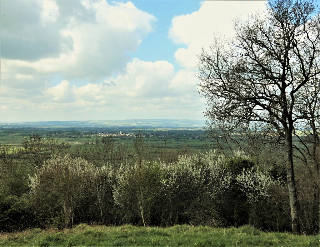 Somerset Levels beyond the blossom by julienne1