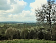 12th Apr 2021 - Somerset Levels beyond the blossom