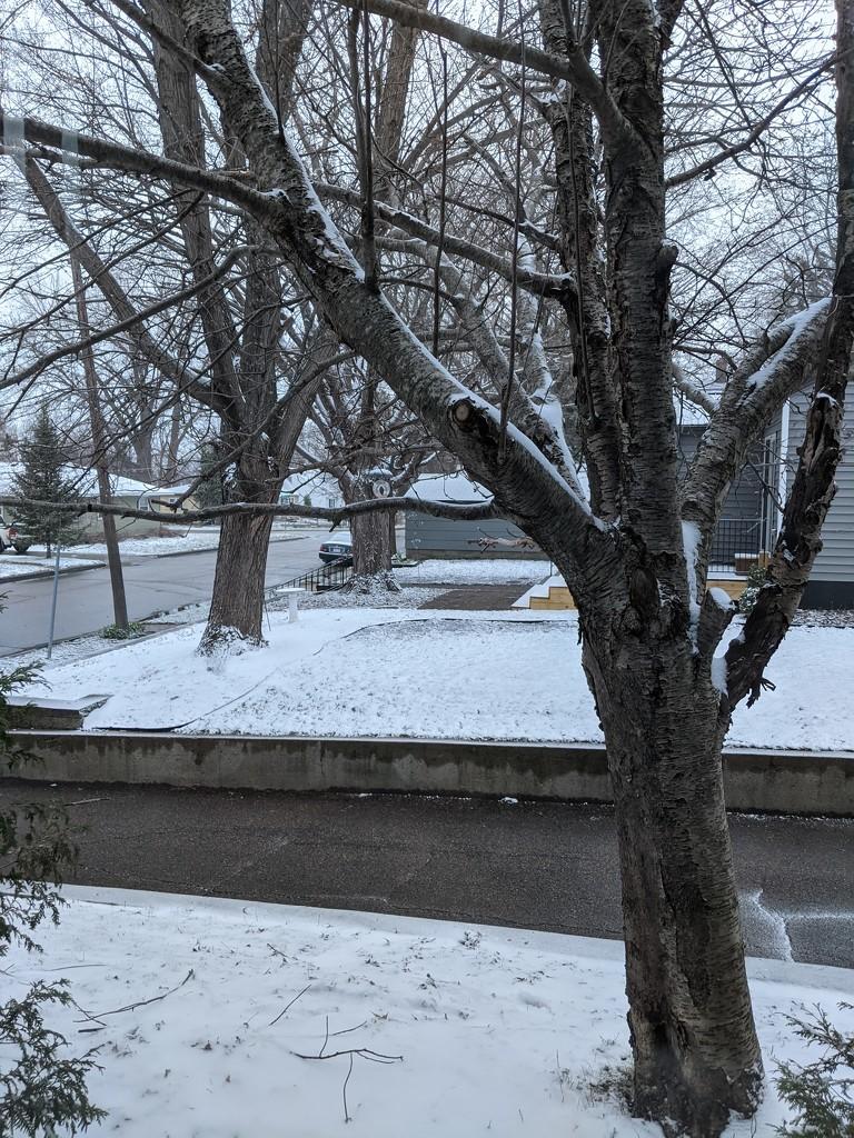 Snowy Day by prairiesmoke