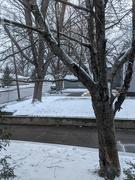 13th Apr 2021 - Snowy Day