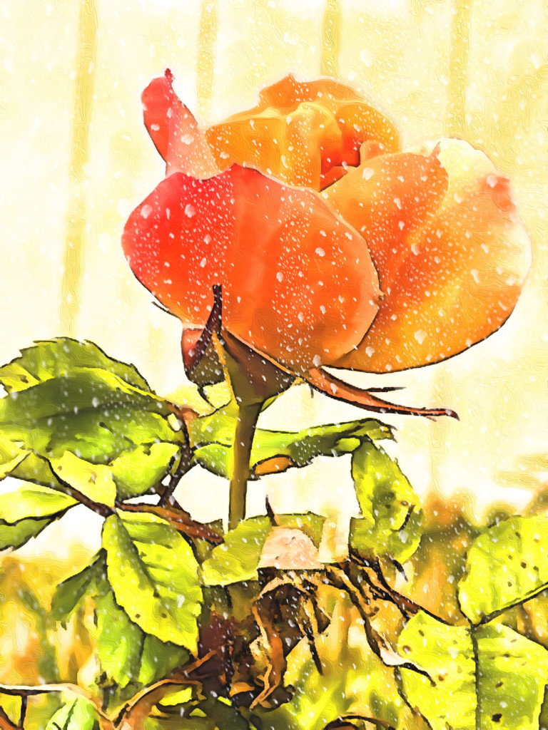 Roses and raindrops - tag challenge 178 by kathyboyles