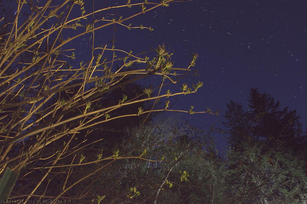 Spring Time - 2021_04_13 night by byrdlip