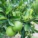 Oranges 🍊