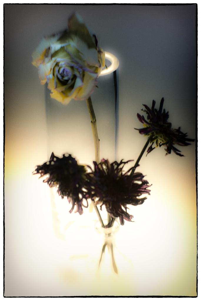 Glow by joysabin