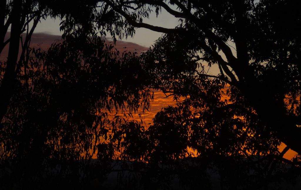 thru the kitchen window by koalagardens