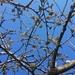 Buds and blue sky