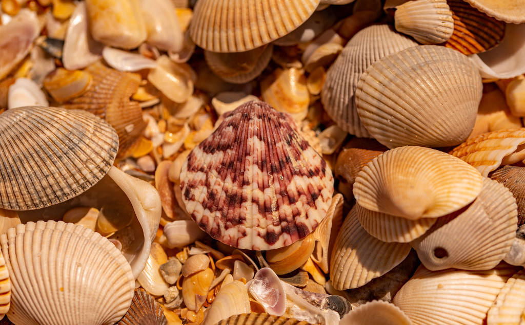 A Collection of Shells on the Beach! by rickster549