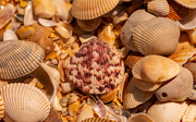 14th Apr 2021 - A Collection of Shells on the Beach!
