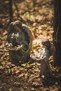 13th Apr 2021 - woodland fairies