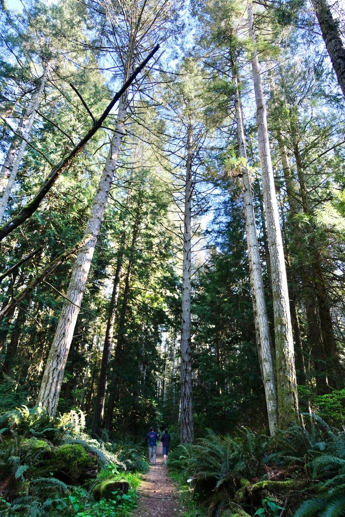 Little men, tall trees by yoland