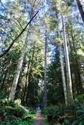 15th Apr 2021 - Little men, tall trees