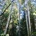 Little men, tall trees