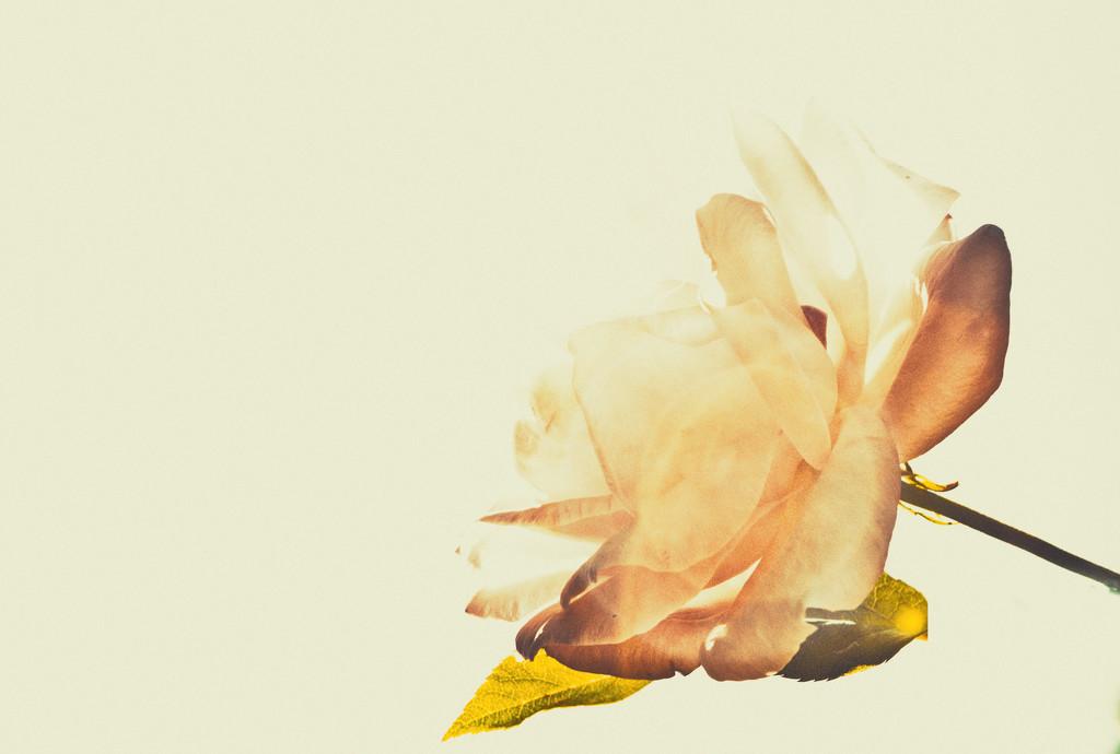 Minimalist Challenge - Flowers 1 by annied