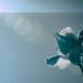 Minimalist Challenge - Flowers 2 by annied