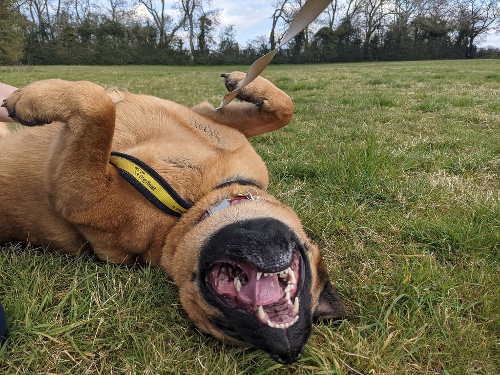 Never Wake A Sleeping Bear by bulldog