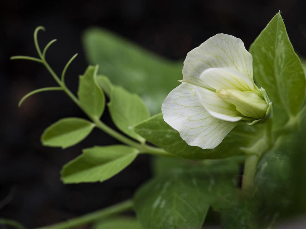 Flower 2 Macro by ethelperry