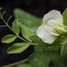 Flower 2 Macro