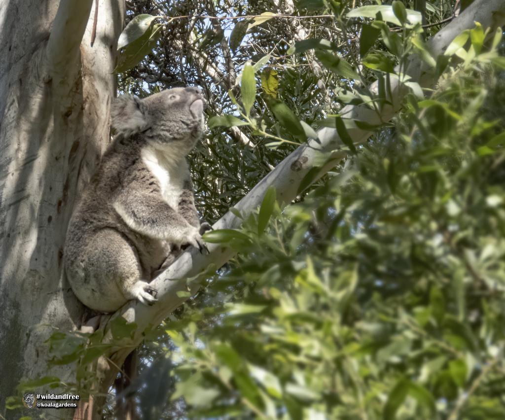 and stretchhhhhhh .... by koalagardens