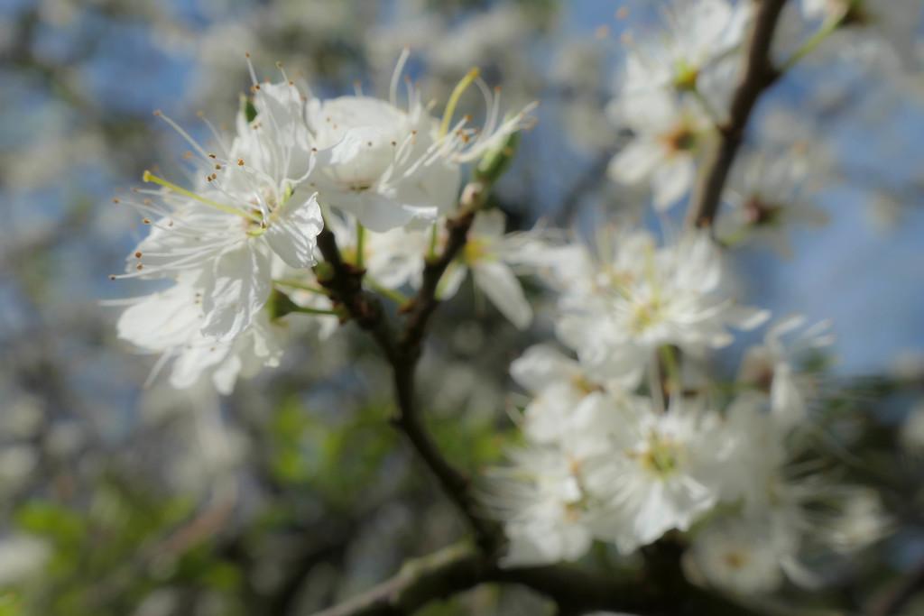 Celebrating spring by stiggle