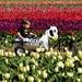 Fun in the Tulips