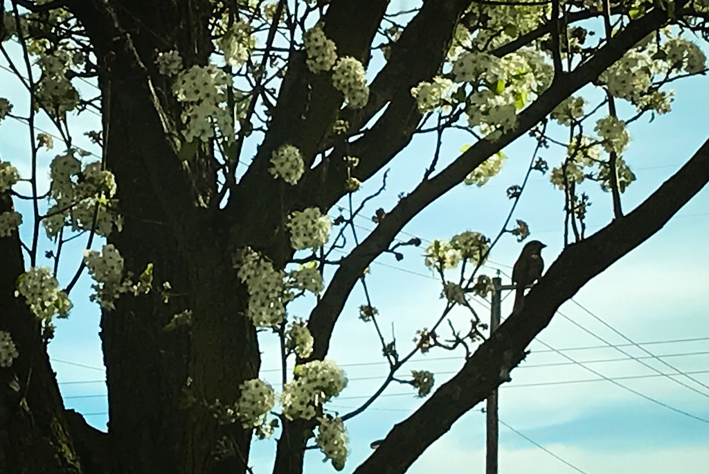I see a bird in the tree by mittens