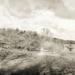 Winkworth Arboretum panorama