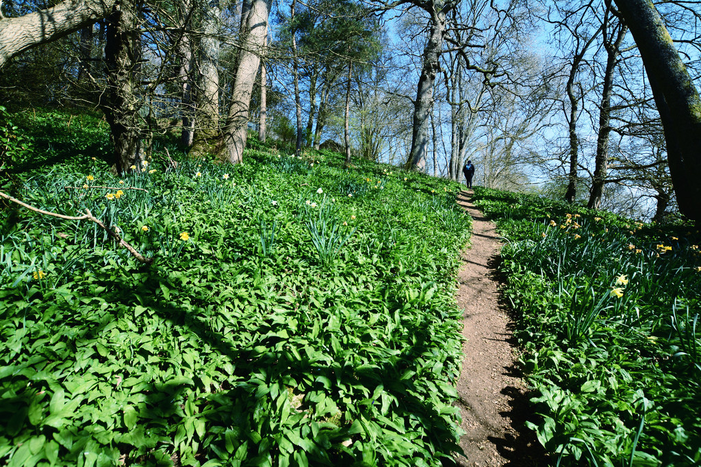 Woodland walk by rumpelstiltskin