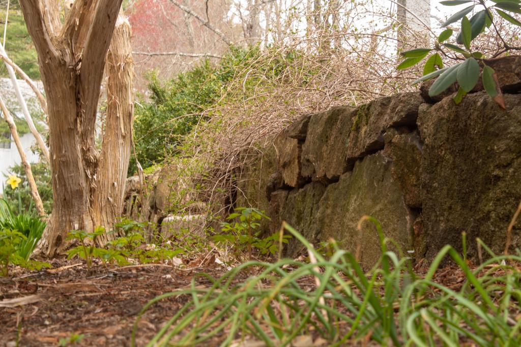 Secret Garden - Day 15 by tdaug80