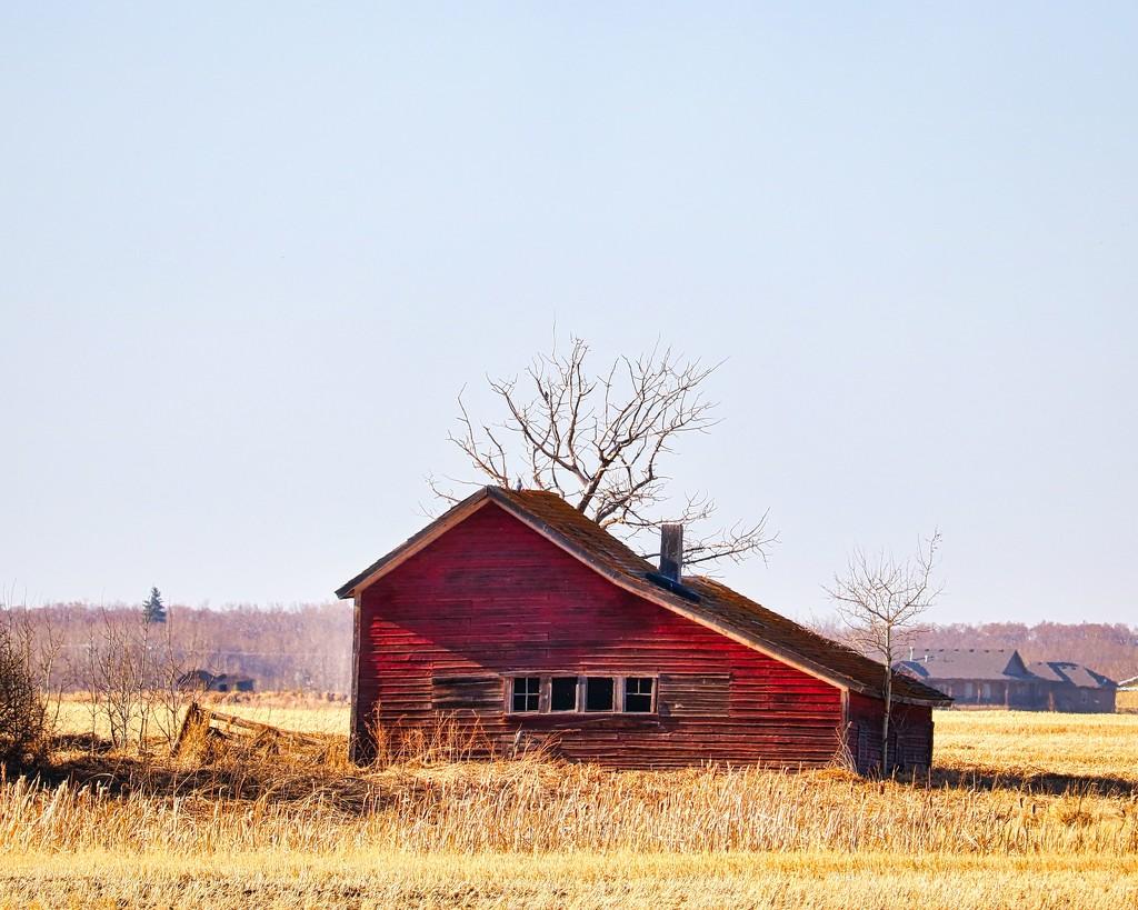 Homestead in a Field by rwaterhouse