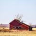Homestead in a Field