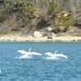 Swan Lake duet