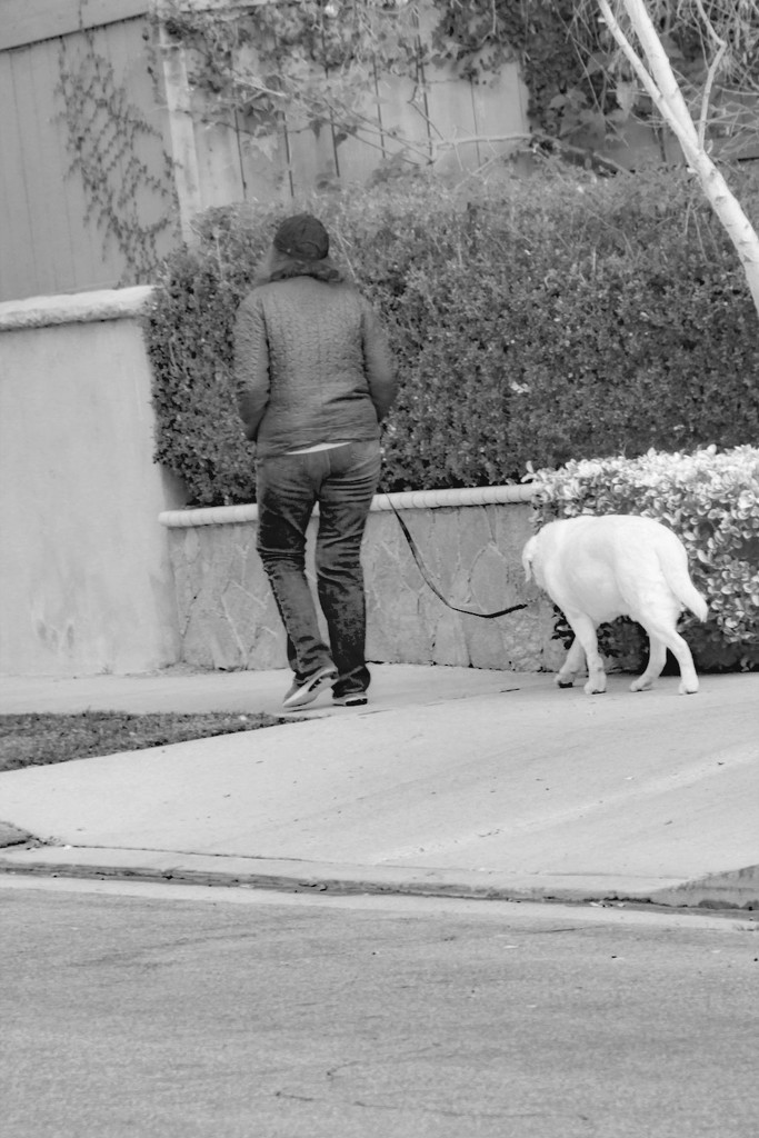 Walking the Dog by jaybutterfield