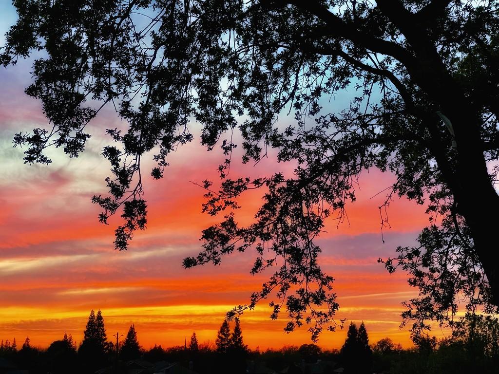A Sunset Paints the Sky by gardenfolk